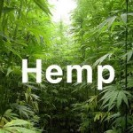 US Hemp Producers Set Up Shop For A Day On Capitol Hill To Lobby For Lifting Federal Hemp Ban