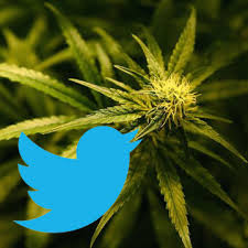 Greenspoon Marder Attorney Hosts Live Twitter Chat On DEA Rescheduling Decision