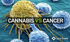 Press Release: Highlighting Companies Indentifying Cannabis Strains To Fight Cancer