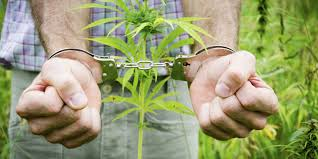 Cannabis Arresting Times