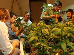 Australia: Federal Govt Gives $A466K To Uni of Melb To Find Out Which Cannabis Strains Grow The Best Down Under