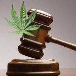 Chicago Tribune Reports On US Law Firms Building Cannabis Practices
