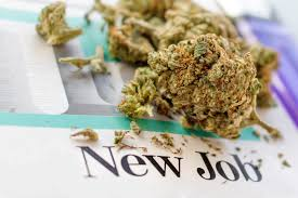 Civilized Website Ranks Top Paying Jobs In The Cannabis Industry, Or So They Think.