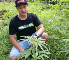 Is Thailand About To Get Its First Legal Cannabis Grow ?
