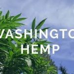Washington Subsidizes Hemp Sector to The Tune of $100K