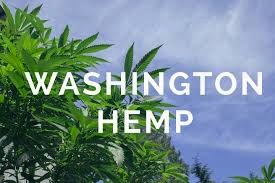 Washington Subsidizes Hemp Sector to The Tune of $100K