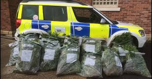 GW's Researchers In UK Find 94% of Cannabis Samples Seized By Police Had Very High Psychoactive Content