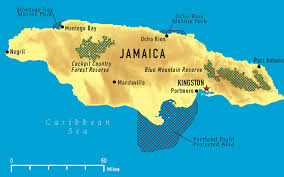 Jamaica Harvests First Medical Cannabis Grows