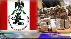 """Nigeria: Mata Masufhafhaye Queen of Illegal Cannabis Escapes Police Net Once More. Police Say, """"We are seriously looking for her"""""""