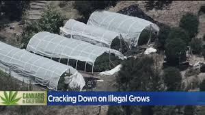 Marijuana.com Report: CA Law Enforcement Officials Say More Money Needed To Manage Black Market