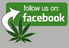 "Facebook ""shadow banning"" cannabis-related pages ?"