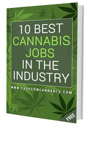 Forbes Report: Salaries Are Up In The Cannabis Sector