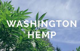 Washington May Hike Hemp Grow Licenses From $300 – $7500 pa