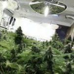 Cannabis & China