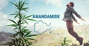 Understanding anandamide, and how it's influenced by CBD