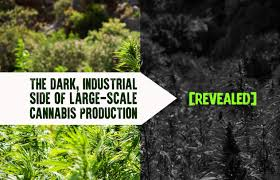 "Cannabis Wire – Article: ""When Oregon Blew It"""