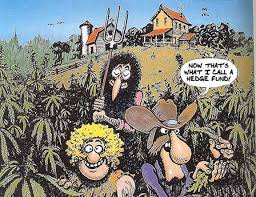 """""""Weed hasn't seen a Caucasian trio this powerful since the Fabulous Furry Freak Brothers"""" Says Philly Enquirer"""