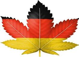 Stop-start tender process hindering German hopes of domestic cannabis success