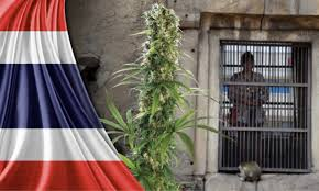 Thai Business & Cannabis Activists Worried That Foreign Companies Will Snatch IP.