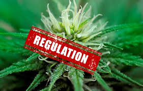 """Marijuana Times Article: """" In Defence Of """"Big"""" Cannabis"""""""