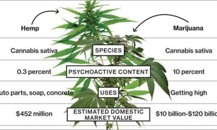 The Difference Between Hemp And Marijuana?