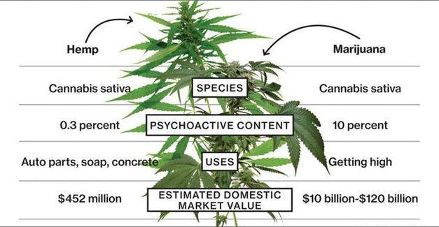 The Difference Between Hemp And Marijuana?