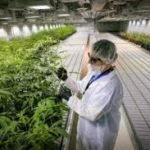 As of 2018 There Are Now More Cannabis Workers Than There Are Librarians or Pilots In The USA