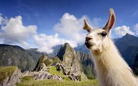 Peru Publishes Regulatory Decree Providing Clarity About Medical Cannabis Programme