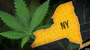 New York's Cannabis Legalization Hearings In Full Flow