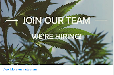 The Bureau Of Cannabis Control Is Hiring Including, Looking For A  Associate Governmental Program Analyst Position