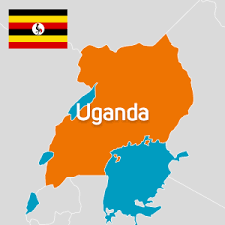 14 foreign firms seek licences to grow marijuana in Uganda