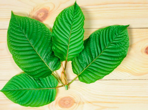Top ways to make Kratom tea from Kratom powder