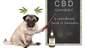 CA: Proposed bill prevents California Veterinary Medical Board from taking special enforcement against vets who recommend cannabis products,
