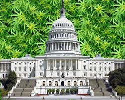 U.S. House of Representatives approves an amendment to the Commerce, Justice, Science, and Related Agencies Appropriations bill that  protects state cannabis programs against federal interference