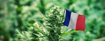 French think tank backs full legalisation of cannabis for billion dollar boon