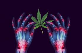 5 Of the Best Cannabis Strains for Arthritis Pain Relief