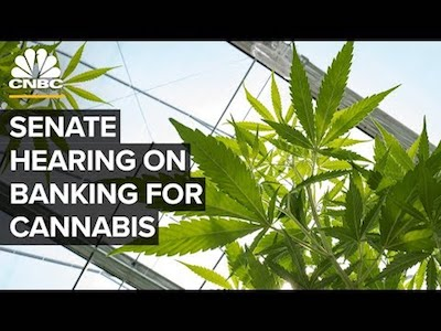 Senate hearing on cannabis industry and banking challenges – 07/23/2019