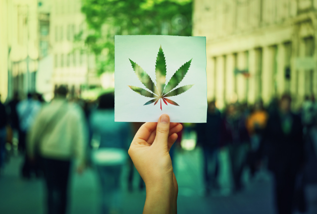 The legality of CBD oil in the EU | Cannabis Law Report