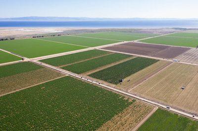 Primordia Announces Launch of Organic California Hemp Operation