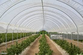 NPR Report: Northern California – Are Fungicides Used In Wineries Leeching Into Cannabis Grows
