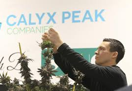 Calyx Peak Companies Hires Former COO of MedMen