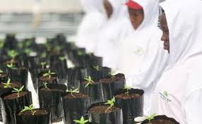 Local media says EU team from Netherlands approves Uganda's bid to export marijuana
