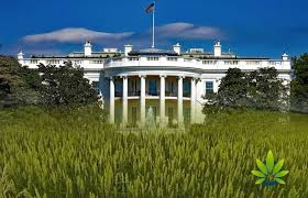 USDA Hemp Rules Now Drafted & Submitted To White House For Approval