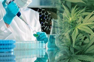 US government awards $3M to fill gaps in medical marijuana research