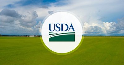 USDA New Hemp Rules For Public Consultation Now Published
