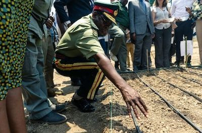Zimbabwean company sows first legal hemp seeds