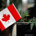 Growing Cannabis Legally in Canada- A Guide