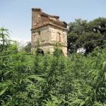 France's Temporary Specialized Scientific Committee (CSST) For Medical Cannabis Named