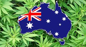 Leading Australian research company says 42% of Australians now support legalisation of marijuana, up 9% points in just four years