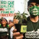 Brazilian Regulators To Vote On Medical Cannabis Proposals